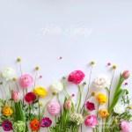 6-hello_spring_ouiouiouistudio