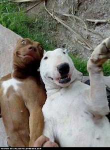 Dogs pose for a selfie