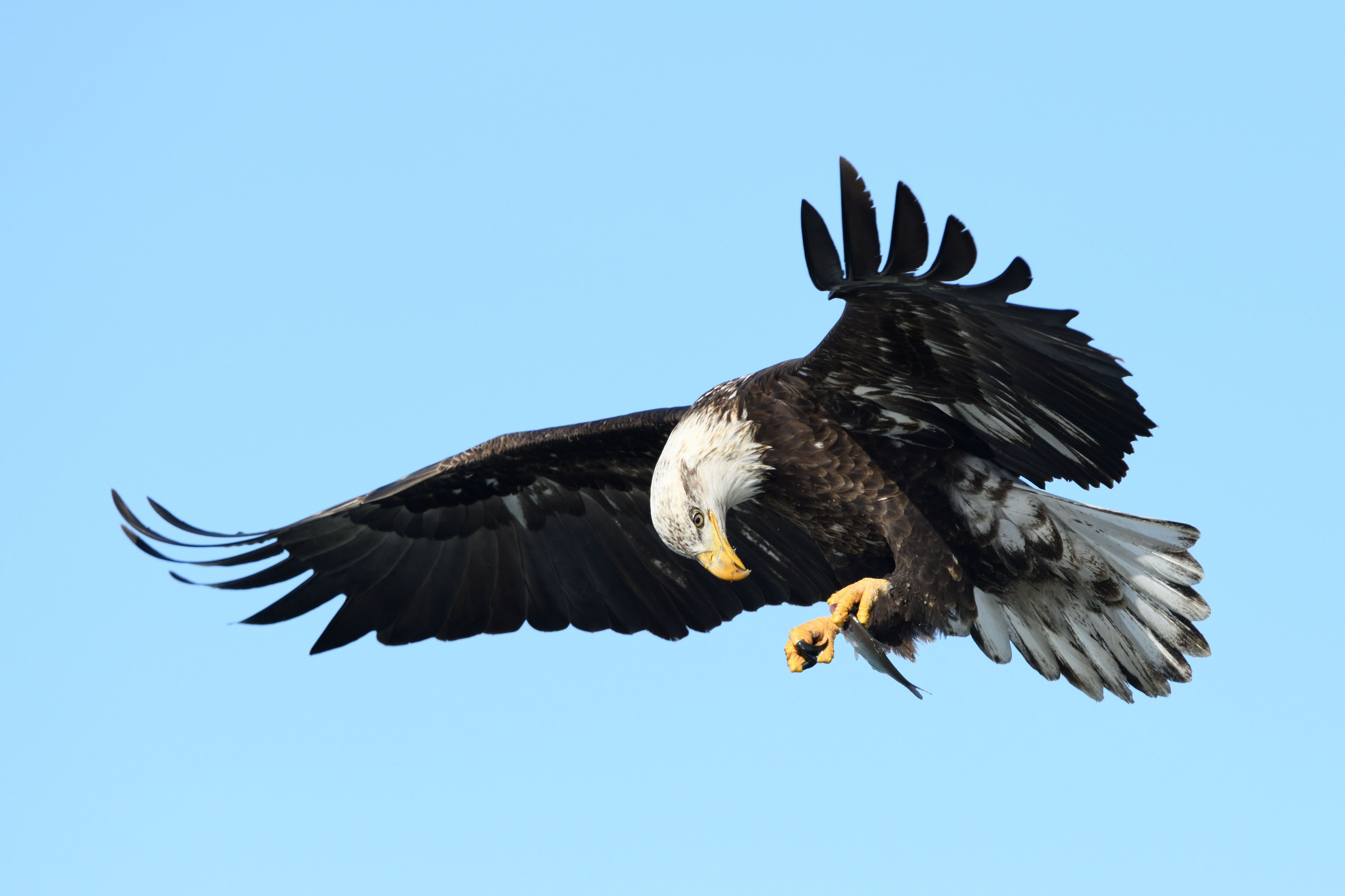 THE BEST LOCATIONS TO PHOTOGRAPH BALD EAGLES
