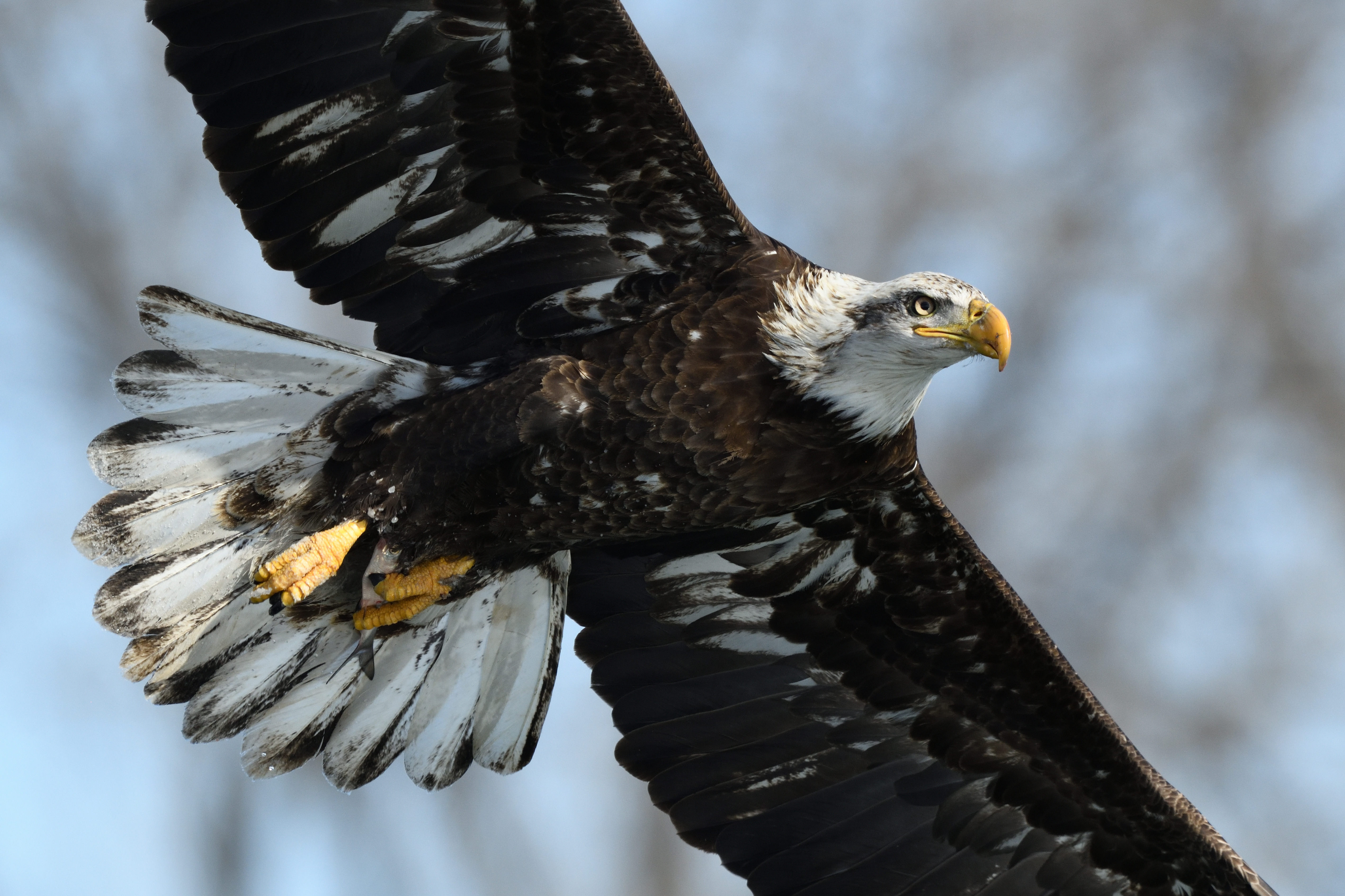 Eagle Photography Tours and Workshops
