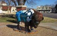 bison-5