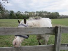 One of several blind horses we fed and petted