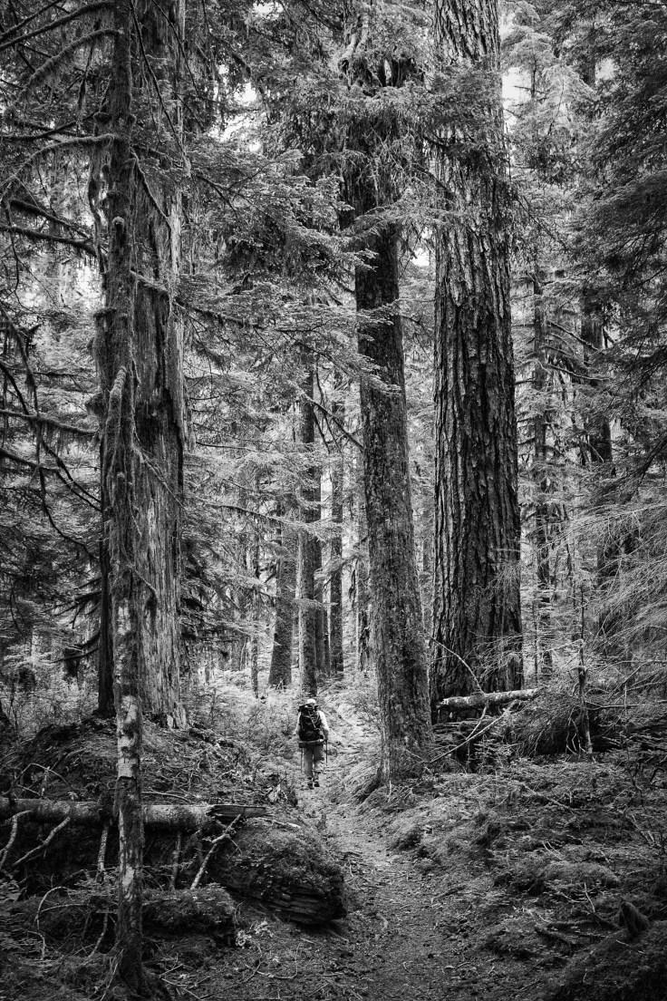 Jeff hiking the N Fork Skokomish Trail, 5Jul2016, Photo by Allan J Jones