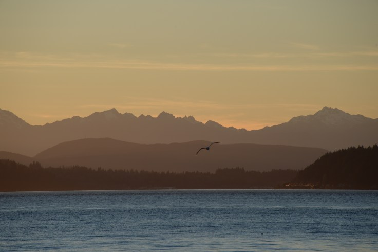 Olympic Mountains Sunset with Eagle, from Alki Beach, Seattle WA