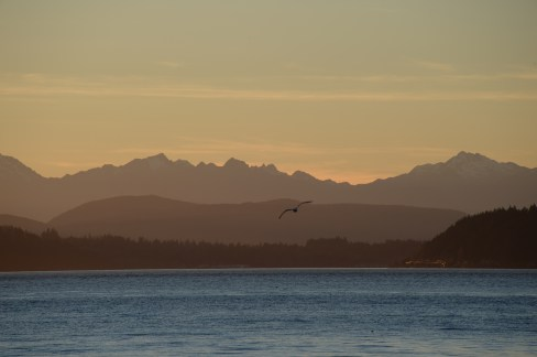 Olympic Mountains with eagle from Alki Beach, Seattle WA, 21Feb2015, Photo by Allan J Jones