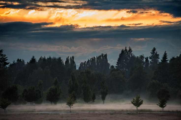 Sunset and ground mist, Olympia WA, June 17, 2016, Photo by Allan J Jones