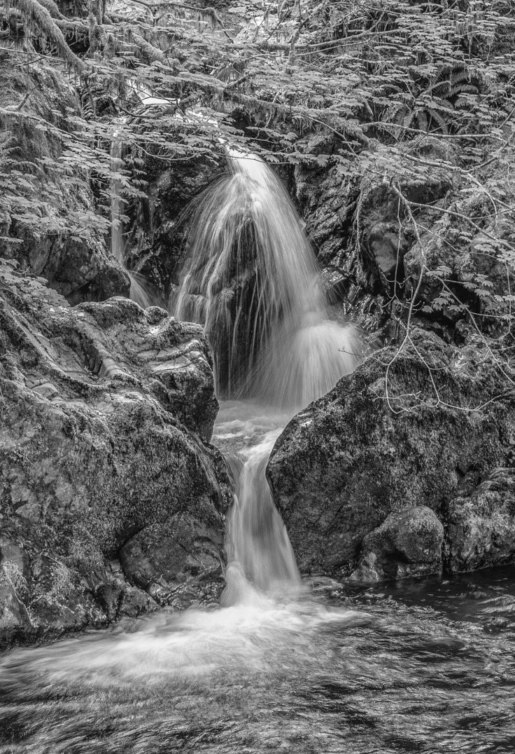 Falls Creek Falls, Quinault, WA, Photo by Allan J Jones