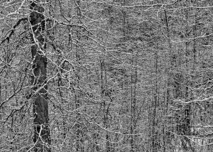 Ice on Branches, Chilkat Valley, Haines, AK, Photo by Allan J Jones