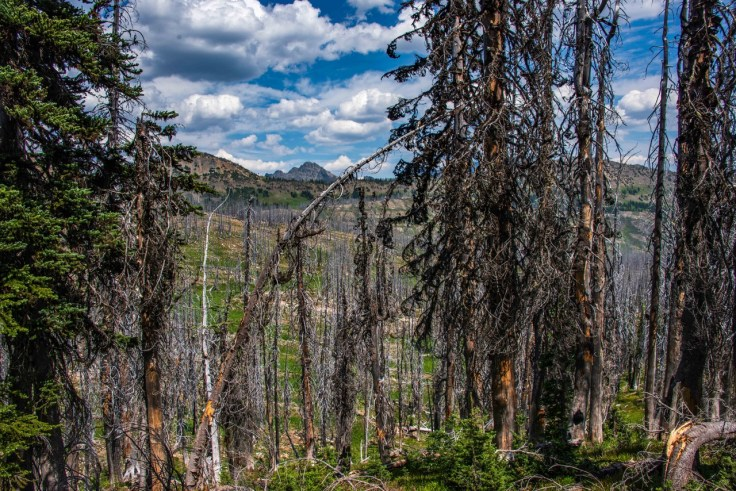 View to Meadows Campground from the Pacific Crest Trail by Allan J Jones Photography