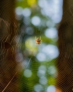 spider from below by Allan J Jones