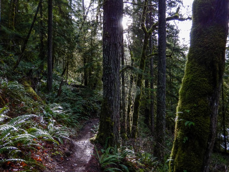 Elwha Washout Bypass Trail by Allan J Jones Photography