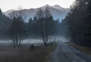Elwha River Road at Dusk with Mist by Allan J Jones Photography