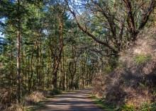 Fort Worden roadway