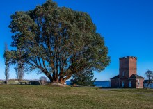 Madrone at Fort Worden