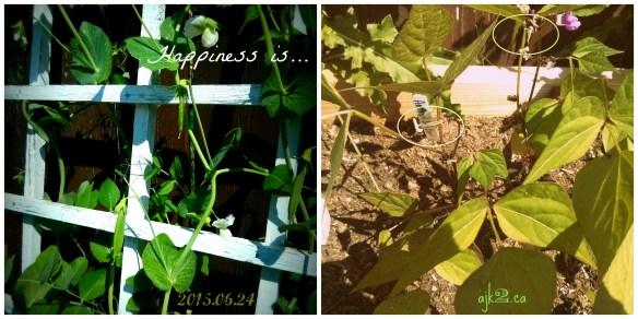 2014.06.25 happiness