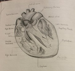 Heartstudy by James P. Wells, via Flickr