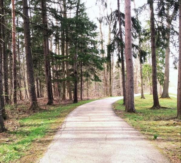 woods22.jpg