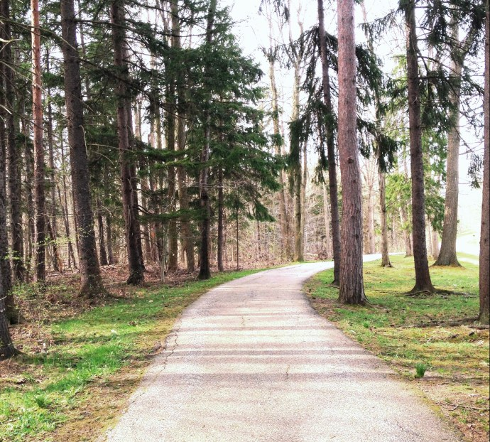 a hiking path through a grove of hemlock trees
