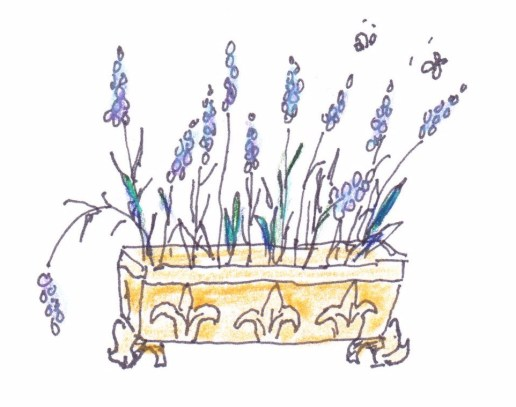 Lavender plant in terracotta rectangular pot