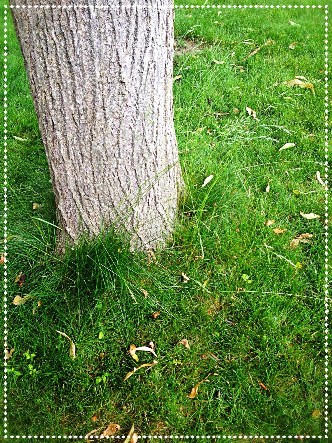 Grass growing around a tree trunk is undisturbed