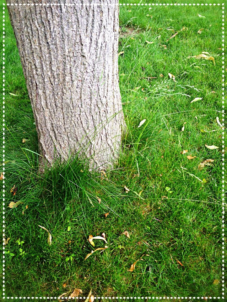 Grass growing around a tree trunk is undisturbed
