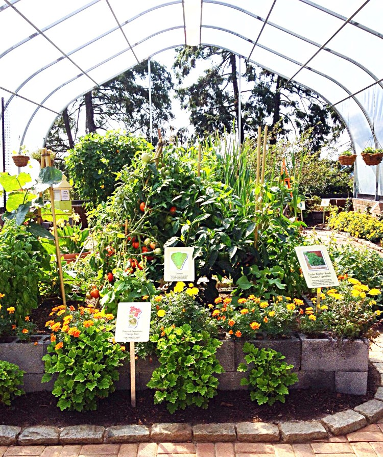 The hoop house is bright with primary colors.