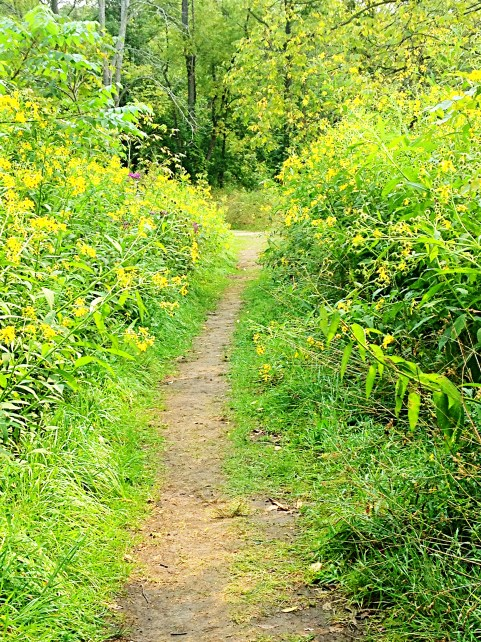 Wildflower path