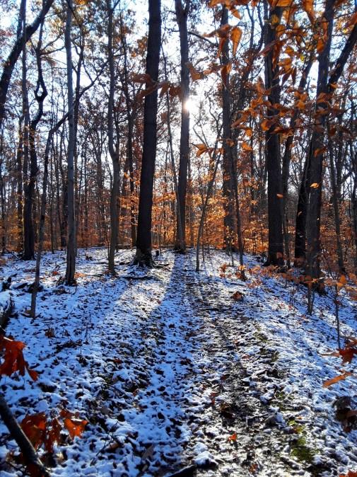 sunlight peeks around bare trees