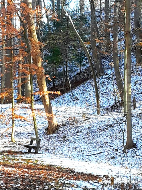Park bench and leafless trees in first snowfall