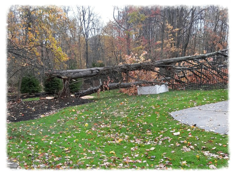 trees blown down by 100 mph winds