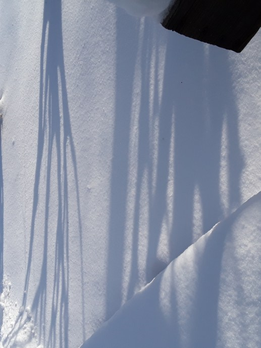 Shadows of burning bushes on the surface of the snow