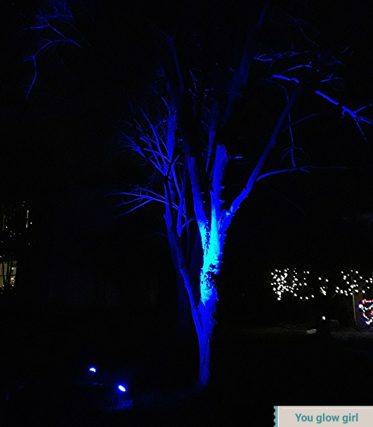 blue floodlights illuminate the maple tree trunk and branches