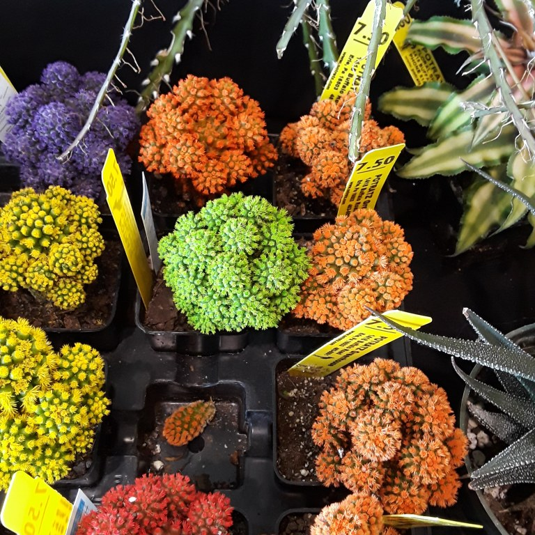 yellow, purple, orange, and lime blooms on tiny cacti