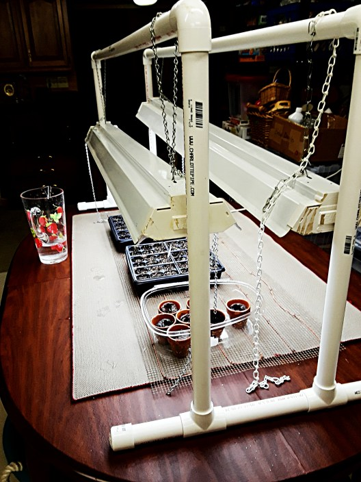 Grow light apparatus is made from PVC pipe.