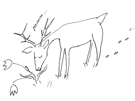 pen sketch of deer eating a tulip plant