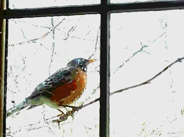 A robin perches on a vine stem outside a rain covered window