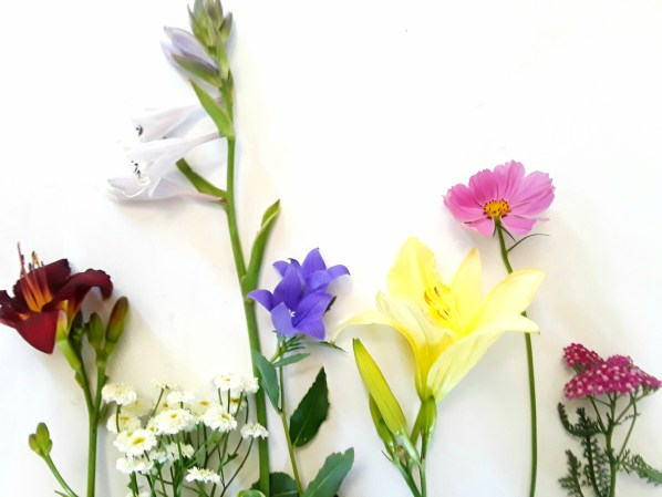 Daylily, hosta., campanula, cosmos, and yarrow photographed against a white board.