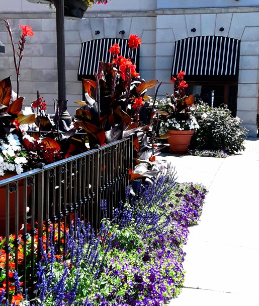 blue salvia, red canna, and black and white striped awnings