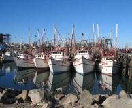 "John Cooper ""Shrimp Boats Sonora, Mexico"""