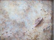 Sand & Broken Shell #1