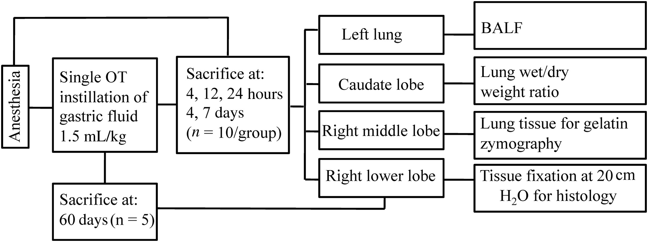 Resolution Of Lung Injury After A Single Event Of