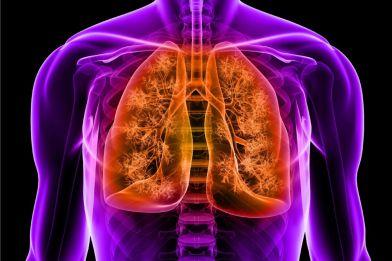 3d set of orange lungs