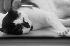 Cat2web
