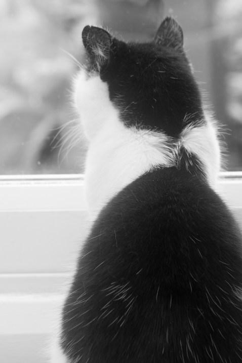 Cat7web