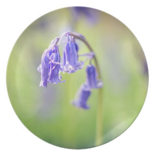 bluebell_picnic_plate-r0e37eb92fee14724807be008c5f2d94c_ambb0_8byvr_512