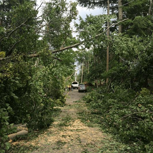 Storm clean up 2