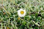 Konec zimy a jaro z pohledu ajurvédy