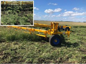Feathertop Rhodes Grass (FTR)