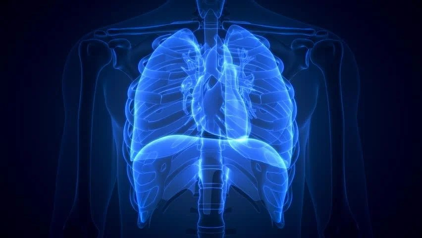 Zoom In To 3d Cg Human Male Close Up Of Chest Wall Thorax