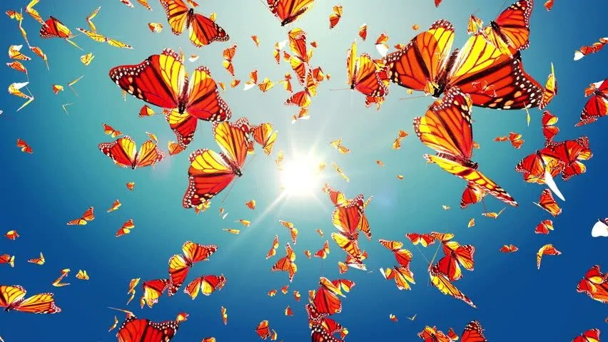 Spring Butterfly Monarch Butterfly Swarm Stock Footage